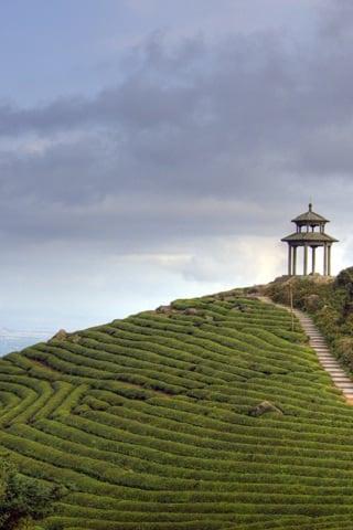 HDR Tea Mountain Pagoda iPhone Wallpaper